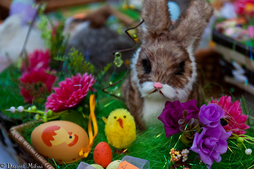 Easter bunny | by Daniel Mihai