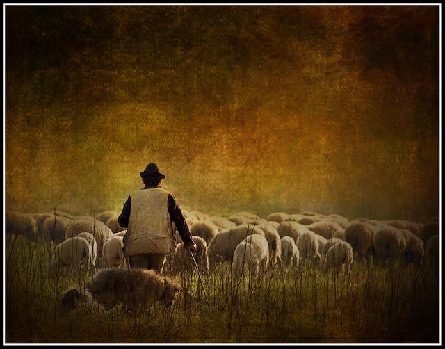 Il pastore   (Explored)