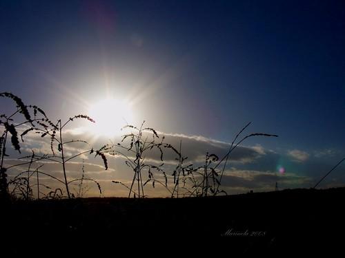 november blue autumn light sunset camp sky cloud sun plant black fall field sunshine golden weeds afternoon herbs horizon country silhouettes romania rays silueta toamna nor bit apus raza albastru dupaamiaza asfintit stralucire marinela2008 oltcounty