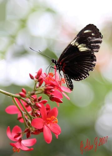 canon butterfly bokeh 7d mygearandme 100mmmacrof28lisusm