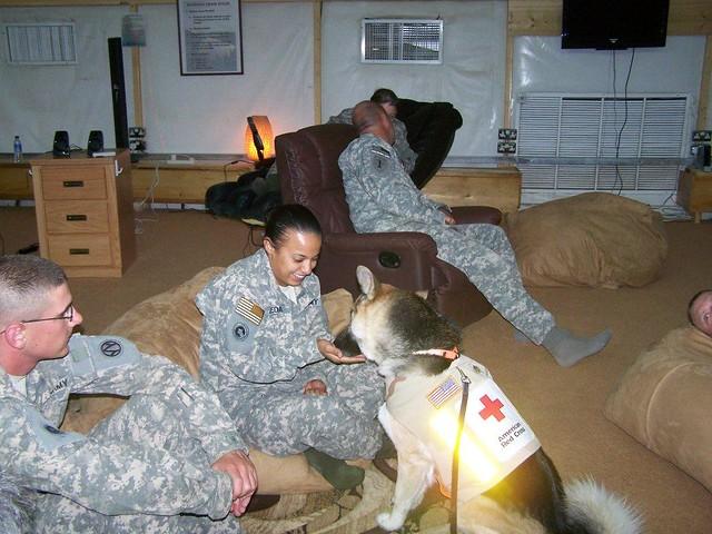 Fursa the Therapy dog