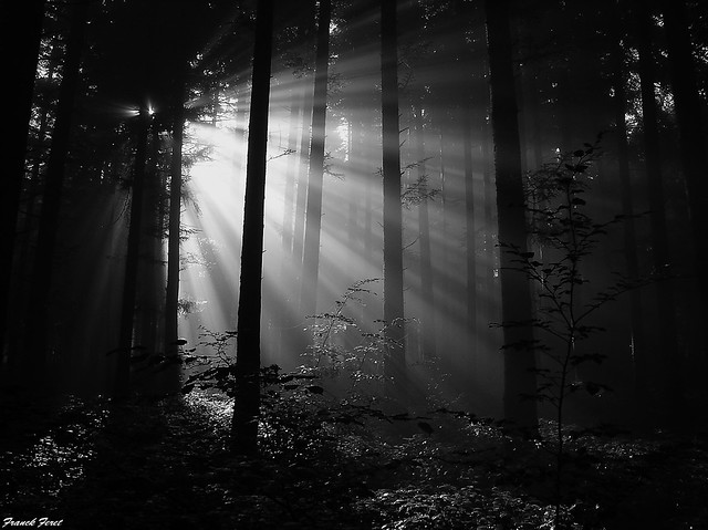 rayons de soleil dans la foret de Myon ** sunrays in the forest of Myon **