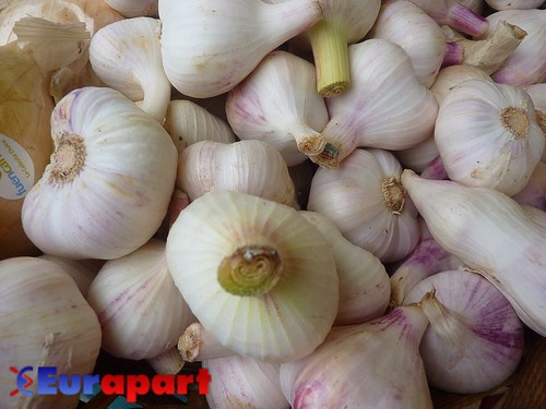 Garlic, place Flagey Market, | by John Williams / Eurapart