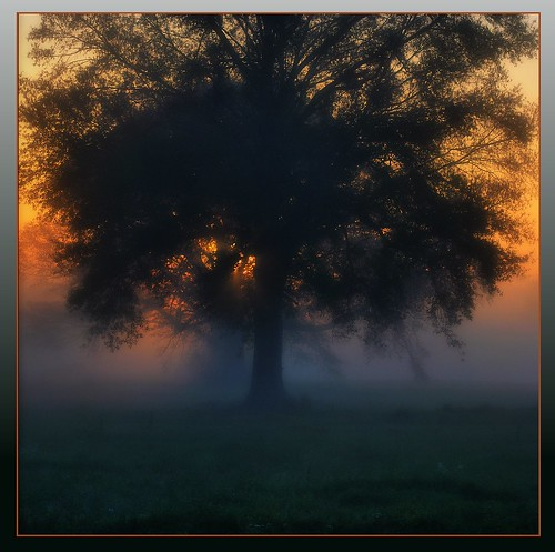 travel trees mist nature fog sunrise mississippi carriere