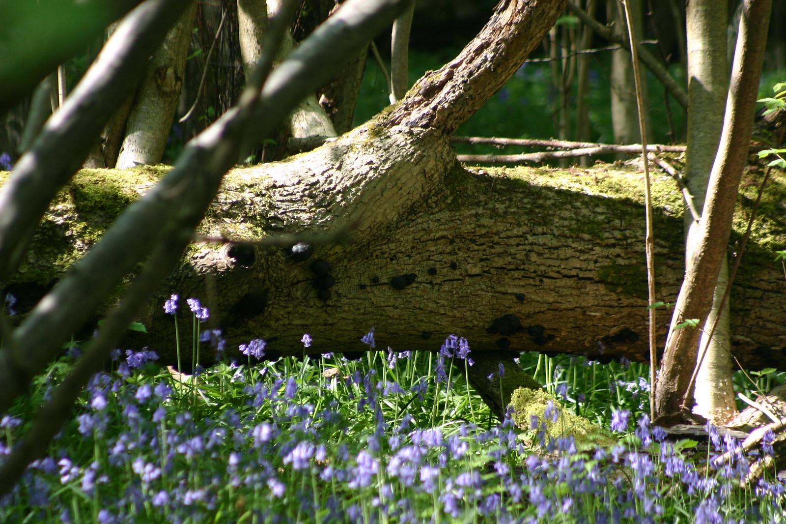 Bells and fallen tree