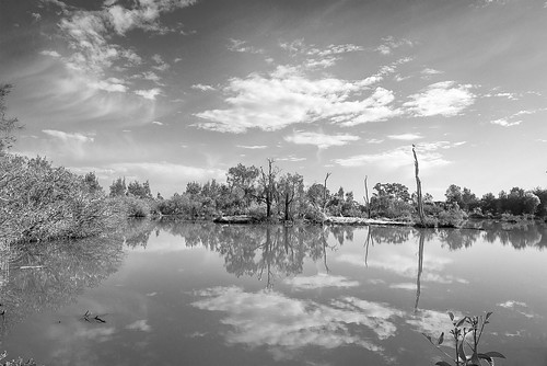birds landscape lagoon oxleycreekcommon