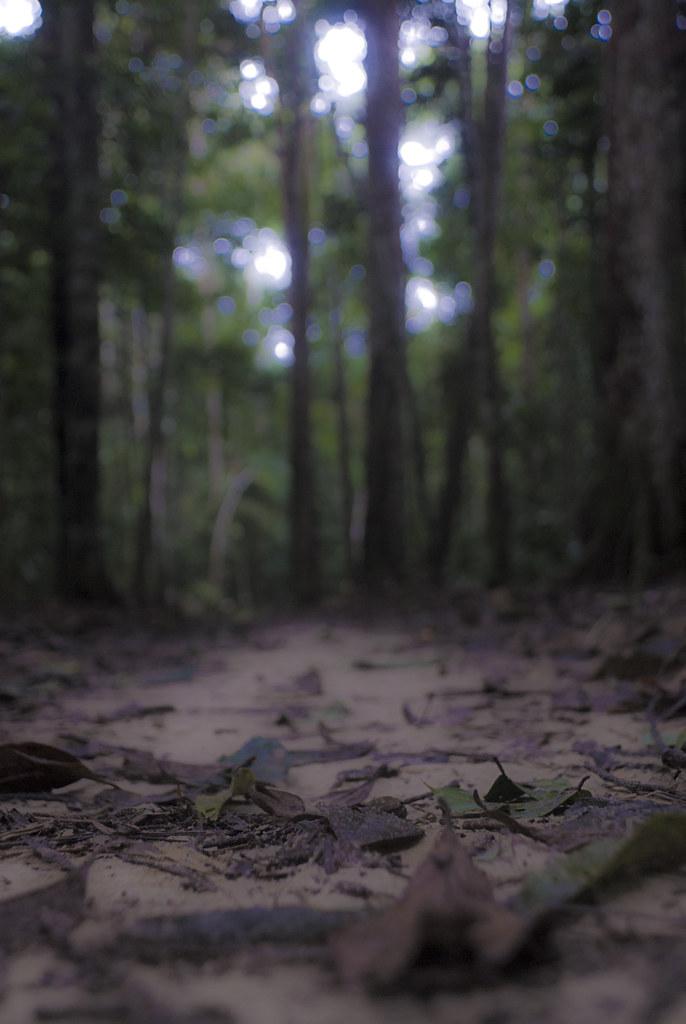 O amanhecer na Floresta