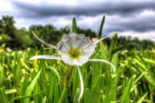 flower sc canon spider canal lily south rocky ii carolina bloom usm shoals 6d f28l landsford ef2470mm