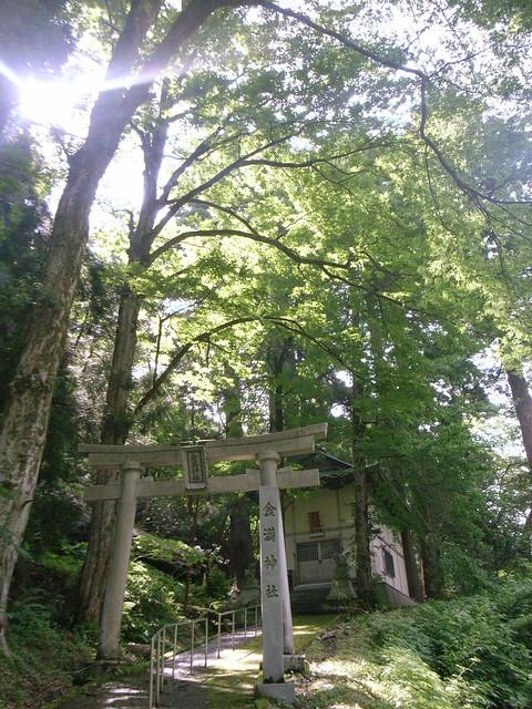 2011/7 くるみの巨樹さがし(石川県白山市 金満神社)