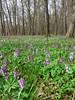 Les v okolí Poděbrad, foto: Petr Nejedlý