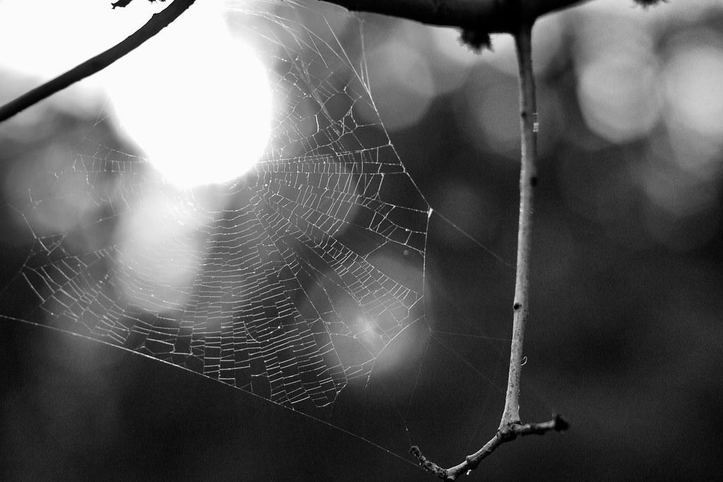 2014/365/169 It Is Just The Web, That's It and Everything