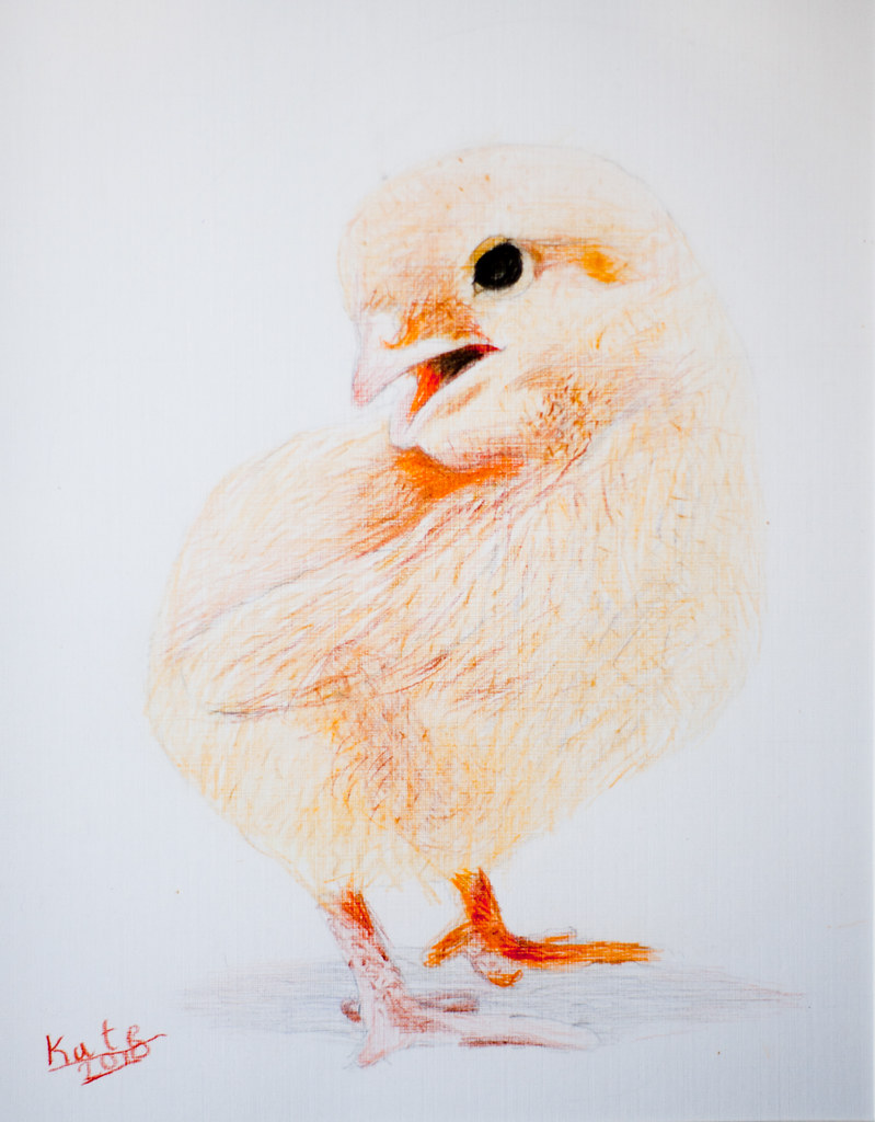 """chick"" by Kate Westfall"