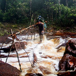 Mon, 06/02/2014 - 8:33am - Our trailcutter Mani crosses one of the creeks on our makeshift log bridge. Photo by Fabian Michelangeli.