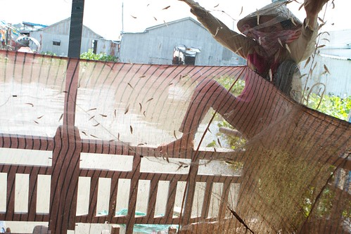 Catching baitfish for Fish farms in Mekong Delta | by Ronald de Hommel