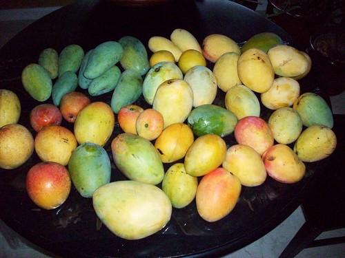 TREC Mangoes 006