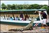 costa_rica_crocodiles-2 (Copy)
