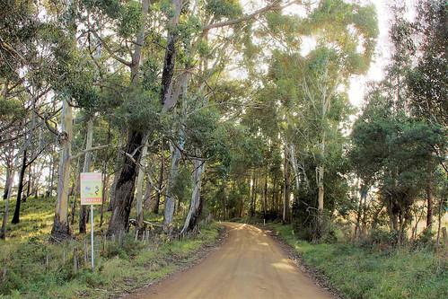 trees blackhills view derwentvalley country australia tasmania hdr countryroad picturenaut tasmanianscenary