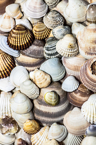 SHELLS | by Soledad_Perez