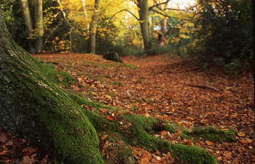 Moss and roots | by James E. Petts