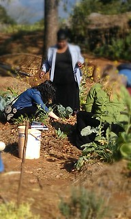 Peace Corps Permaculture Introduction & Nutrition, August 2013 | by guba.swaziland