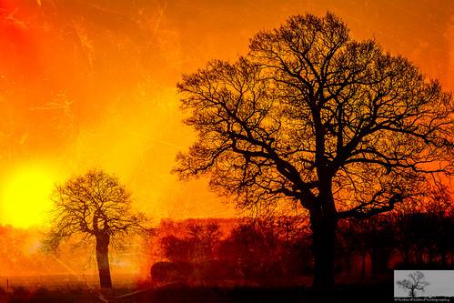 trees sky cloud sun tree skyline sunrise bedford dawn bedfordshire felton shilhouette cardington robertfelton