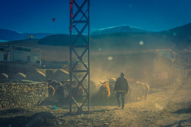 Arrival on sunset filled with ladakhi, yaks & lake