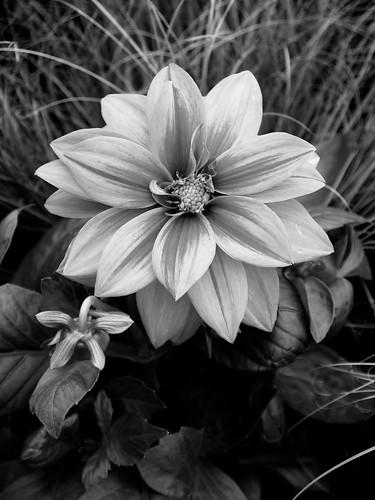 Monochrome Flowers | by Francesco 65