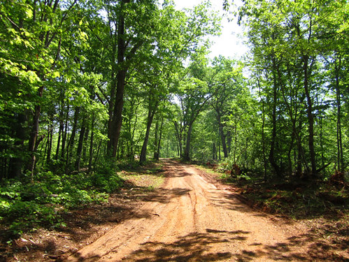 Ridge road through finished harvest area.