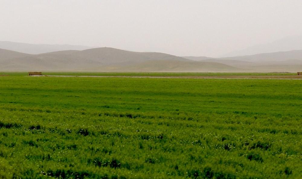 yazd-shiraz-L1030098