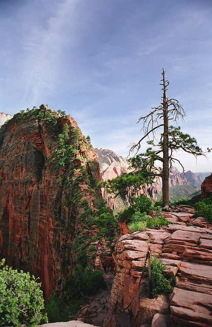 angel's landing: doing a double take