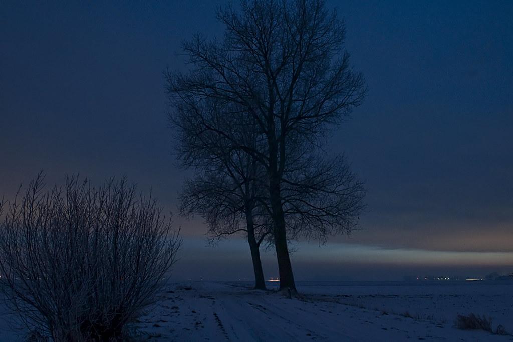 Bomen in de polder na zonsondergang 20101230_9886