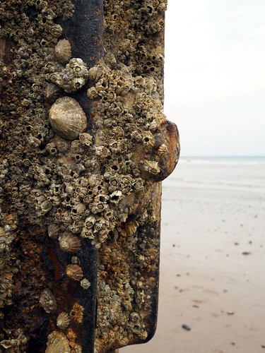 Limpets | by AMcUK