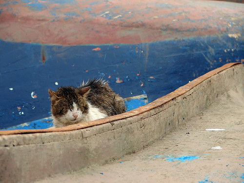 Stray Cat On Upturned Boat, Essaouira | by gripso_banana_prune