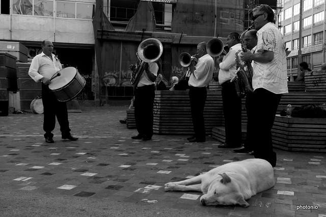 no 90 the band and the dog