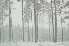 Pastel Wilderness