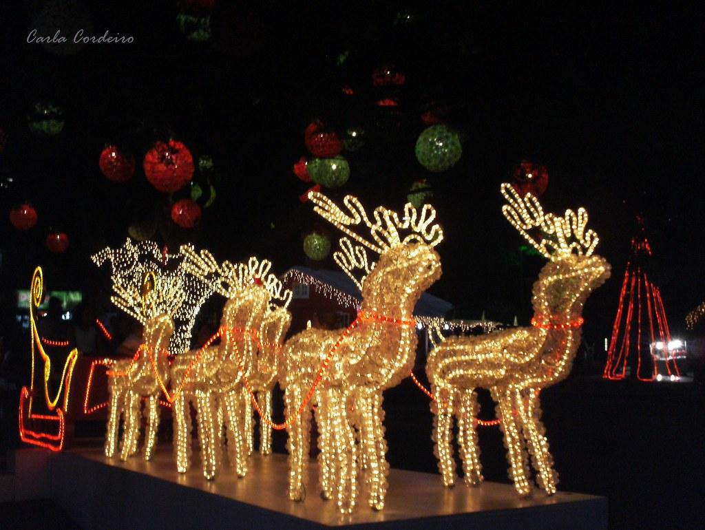 A Rena Mais Famosa Do Papai Noel as renas do papai noel  natal 2010 em teresópolis - 'um son