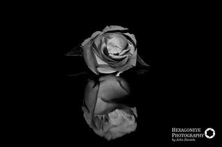 1/365 Rose | by Hexagoneye Photography