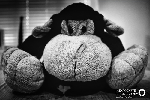 14/365 Monkey is Tired and doesn't want to play today   by Hexagoneye Photography