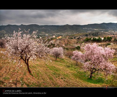 flores campo almería almendros 2011 lubrín a3b nikond300 jatm64