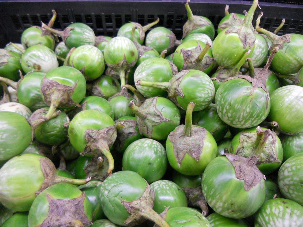Thai eggplant