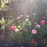 Watermelon, zinnias, and marigolds