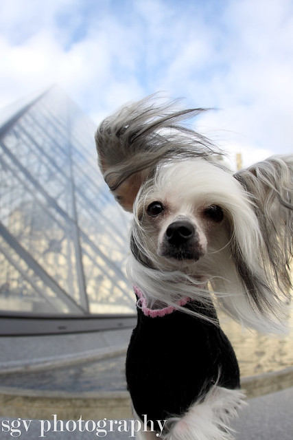 2/52 weeks of Molly - The Louvre is sooo boring!