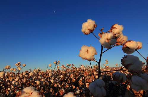 moon field sunrise canon tokina cotton ultrawide 116 cottonfield t2i