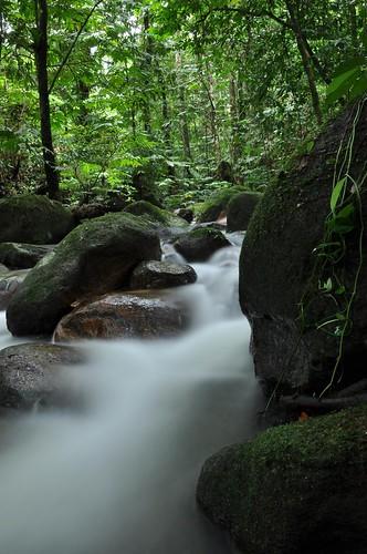 nature forest waterfall uluyam