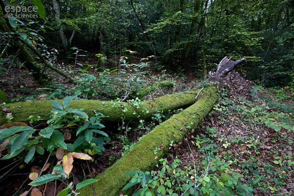 Biodiversité-Escargot de Quimper