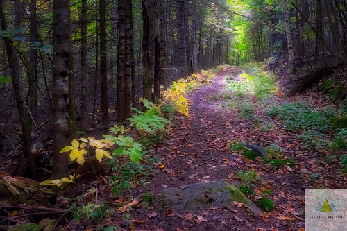 fall autumn color forest path shade light hope