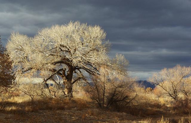 Bosque del Apache NWR IV, New Mexico