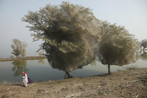 призрачните дървета в Пакистан