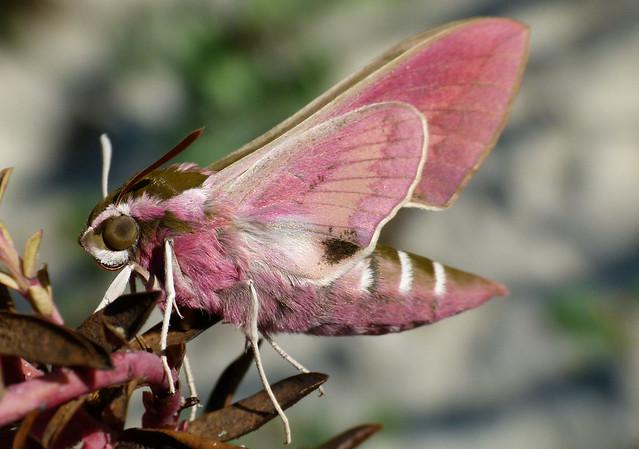 Historia de una mariposa II.........(30 km después.........)