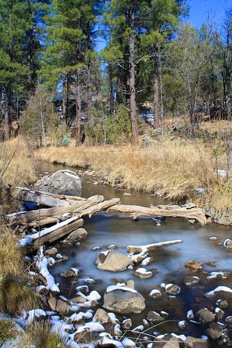 trees arizona white snow mountains cold green pine canon rebel frozen forrest snowy top nick lakeside xs martinez